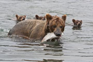 Bear with bear cubs