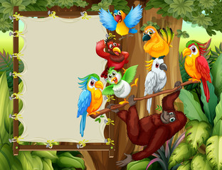 Frame designs with wild birds and monkey