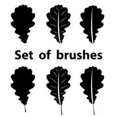 Brush set of oak leaf