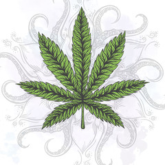 Marijuana leaf. Hand drawn isolated illustrations.
