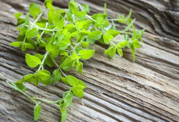 Frische Majoran Blätter - Origanum majorana - auf altem Holz / Treibholz Hintergrund