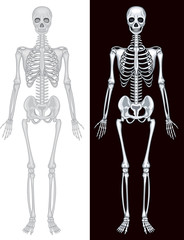 Human skeleton in white and black background