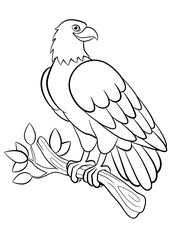 Coloring pages. Wild birds. Cute smiling eagle.