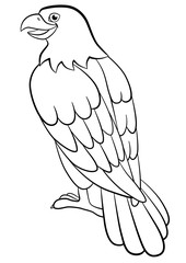 Coloring pages. Wild birds. Cute eagle sits smiles.