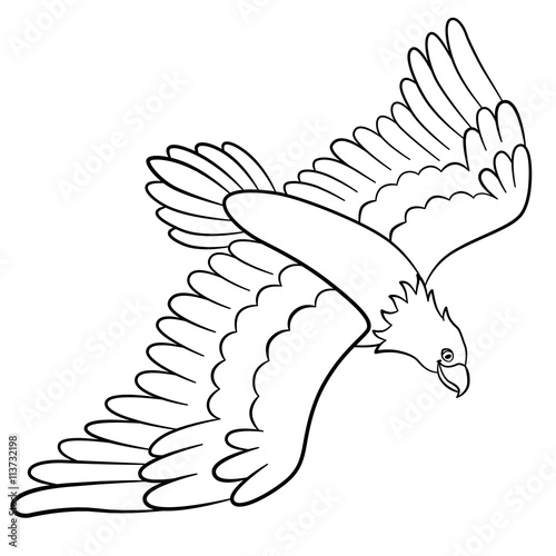 Coloring Pages Wild Birds Cute Flying Eagle Smiles