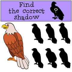 Children games: Find the correct shadow. Cute bald eagle sits smiles.