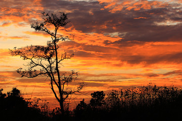 sunset sky with tree in front background in Thailand