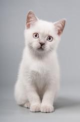 Cute little kitten is sitting on a gray background