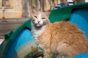 Cat from the port of Marsaxlokk