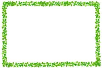 Fresh Green leaves frame isolated on white background.