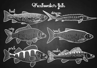 Graphic freshwater fish collection