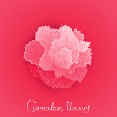 Vector flower of Carnation