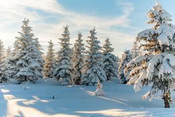Winter forest snow tree scene sun