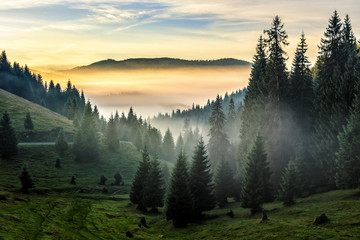 fog on hot sunrise in forest