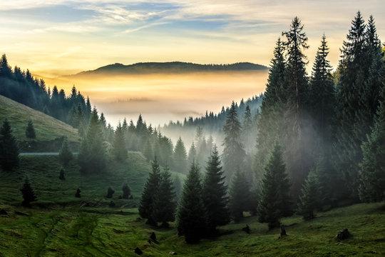 fog on hot sunrise in forest