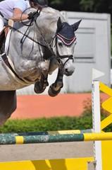 Der Hürdensprung beim Springreitturnier, Pferd mit Reiter im Detail