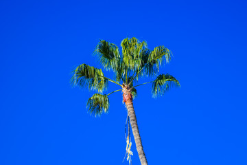 Palm trees at Santa Monica beach in the blue sunny sky. Fashion, travel, summer, vacation and tropical beach concept.