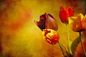 tulpen textur nostalgisch