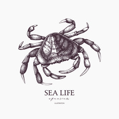 Vector Sea life illustration. Hand drawn Crab sketch. Isolated on white.
