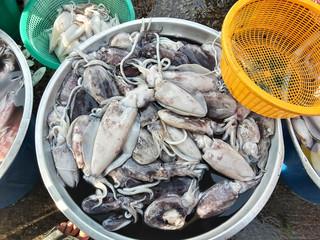Squids raw fresh in market thai