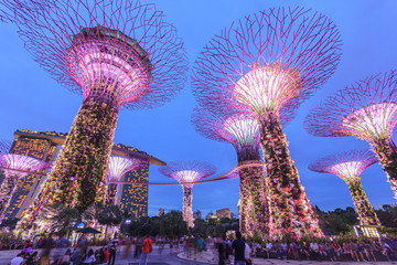 Foto op Canvas Singapore Singapore, Gardens By The Bay, Super Tree Grove