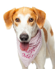 Portrait Happy Rescue Crossbreed Dog