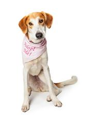 Sad Dog Wearing Adopt Me Bandana