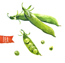 Green peas, watercolor illustration,  clipping paths included