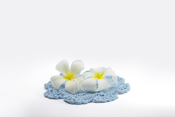 beautiful White plumeria and crochet pattern isolated on White background