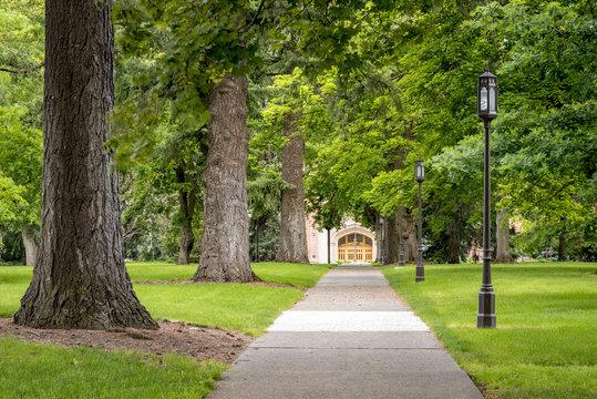 Park sidewalk lead through some trees