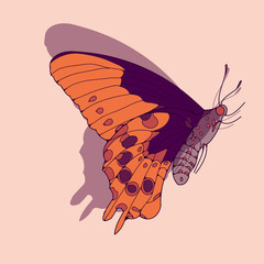 a side face butterfly illustration in orange and purple shades