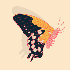 a side face butterfly illustration in dark blue red, and yellow shades