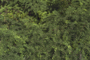 Great green bush of fern in the forest of New Zealand