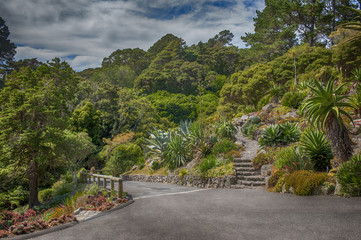 Botanic garden in Wellington, New Zealand