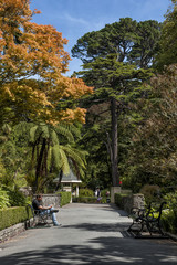 Visitors resting at Wellington Botanic Garden, New Zealand
