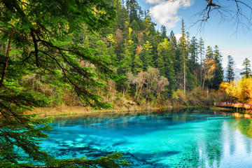 The Five Coloured Pool with azure water among woods
