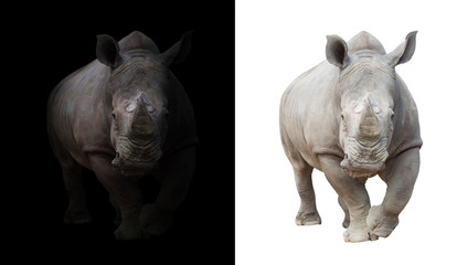Foto op Aluminium Neushoorn white rhinoceros in dark and white background