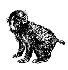 little monkey drawing sketch hand-drawn ink isolated vector illustration