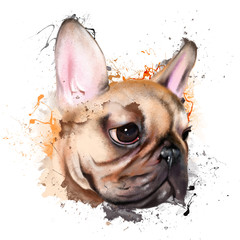 portrait of a French bulldog, with elements of sketch and paint splashes, isolated on white background