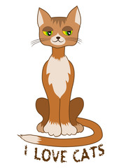 Ginger cat sitting alone on white background