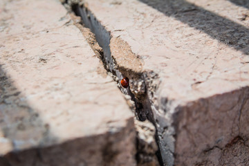 Ladybird hiding inside a crack in stone wall on a sunny spring day in Israel