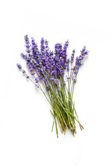 Keuken foto achterwand Lavendel Lavender flowers on white background
