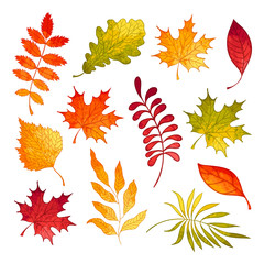 Autumn set with watercolor leaves