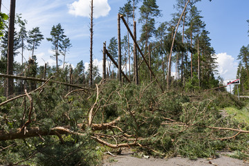 Broken trees blocking the road after the hurricane winds