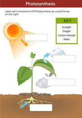 A photosynthesis fill in the blanks worksheet. Key on the right with words