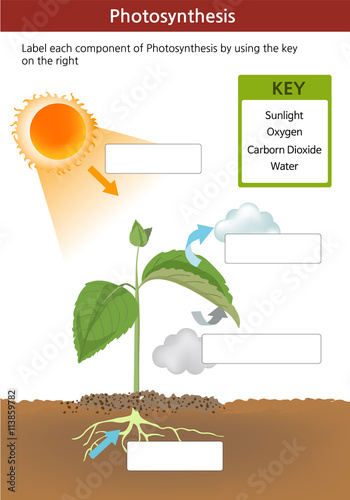 U0026quot A Photosynthesis Fill In The Blanks Worksheet  Key On The Right With Words U0026quot  Stock Image And