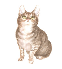 sitting tabby cat. Image of a thoroughbred cat. Watercolor painting