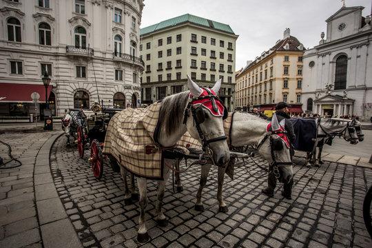Fiaker vor der Hofburg in Wien, Vienna am Michaelerplatz