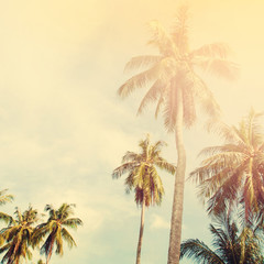 Palm Trees Jungle Toned Shabby Landscape Tropical