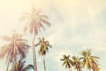 Palm Trees Jungle Blue Sky Toned Shabby Nature